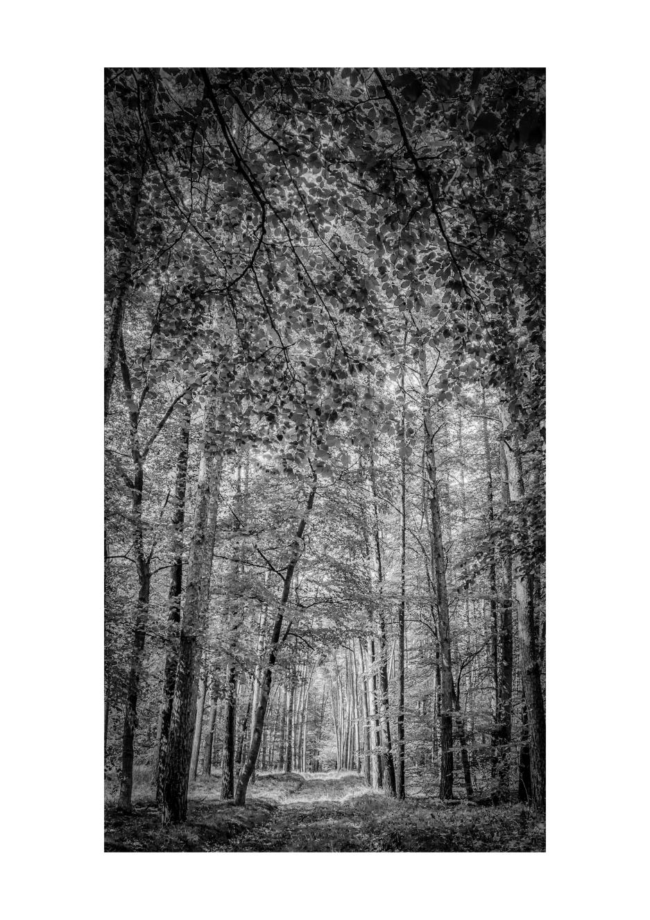 Landscape #28_A3